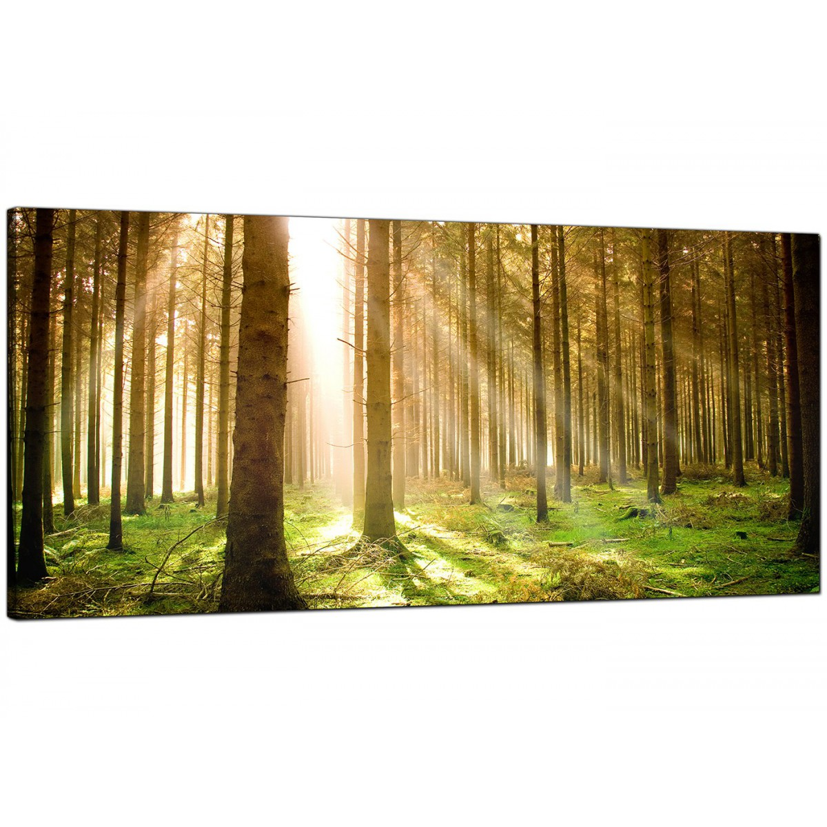 Wall Art Trees Green : Modern canvas prints of forest trees for your dining room
