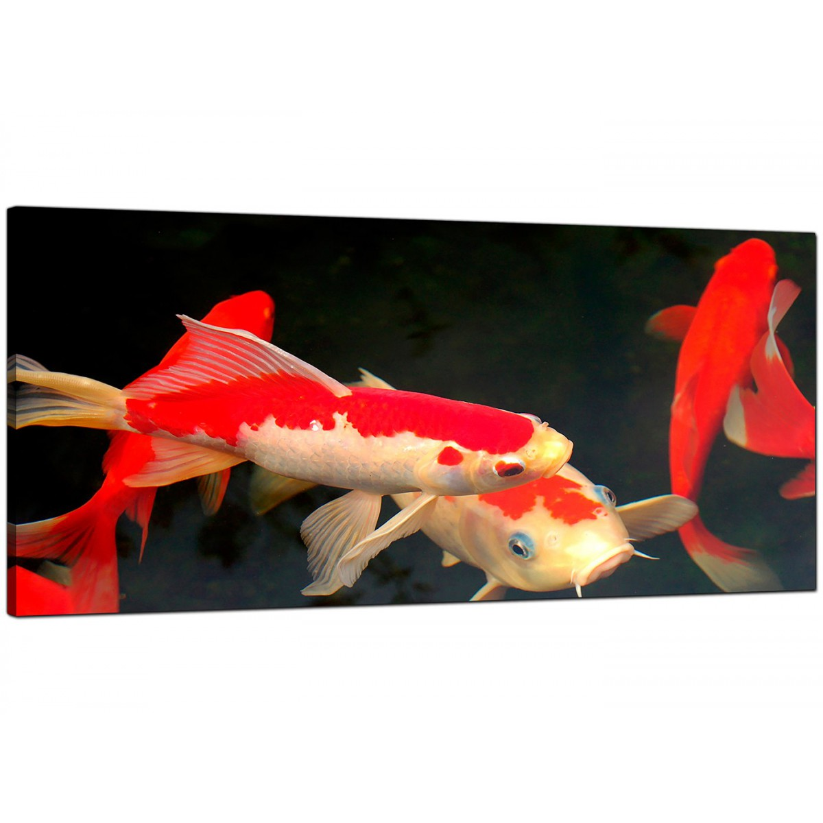 Panoramic canvas prints of koi carp fish for your dining room for Koi carp wall art