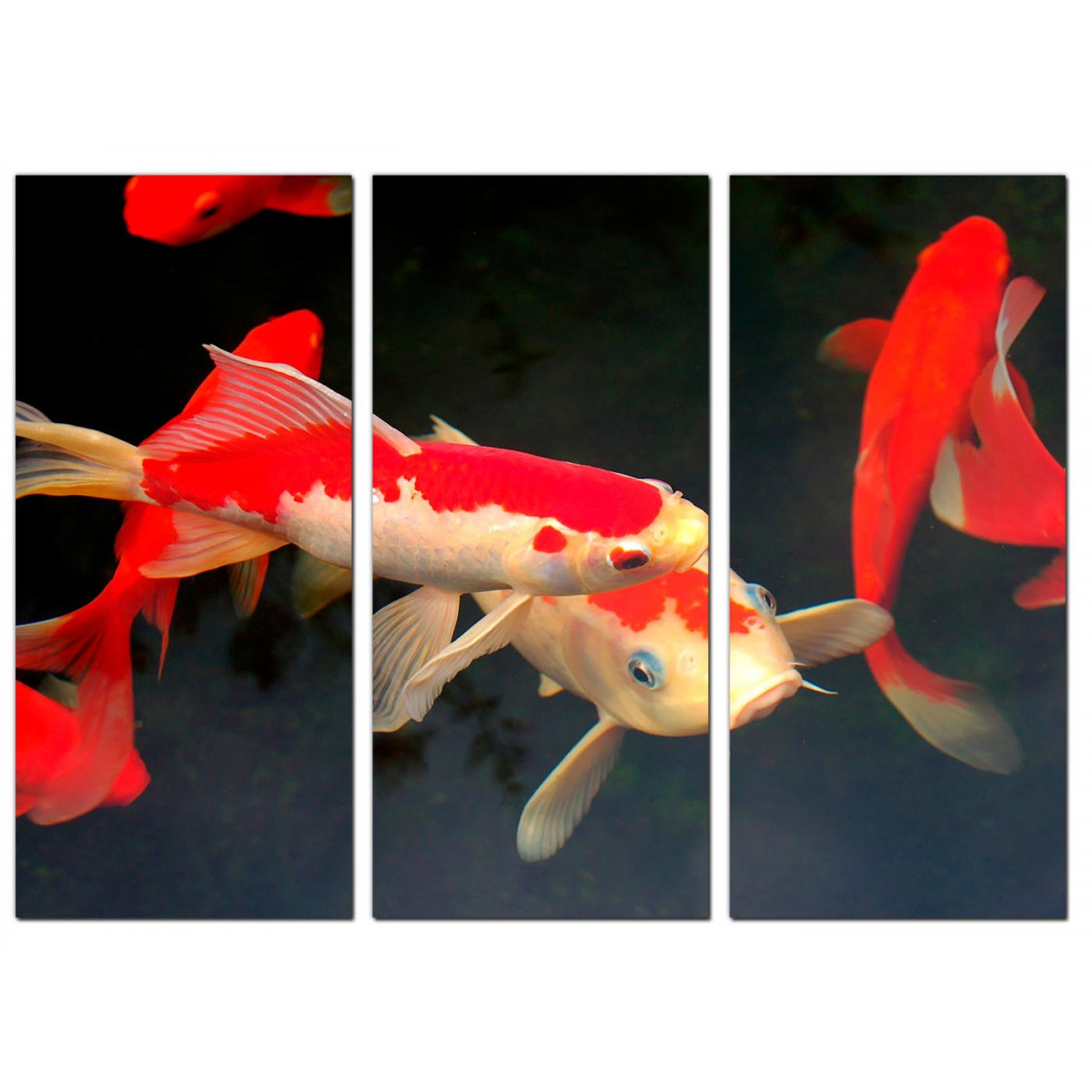 Cheap koi carp canvas prints uk set of 3 for your living room for Cheap koi fish