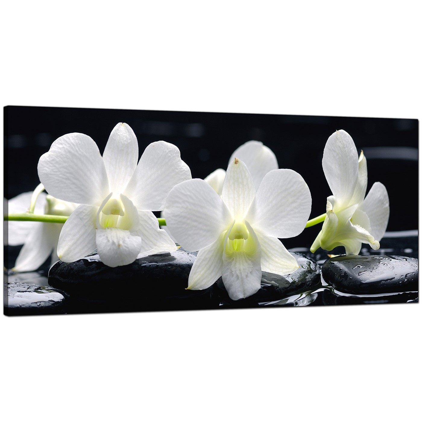 Large Black And White Canvas Prints Of Orchid Flowers