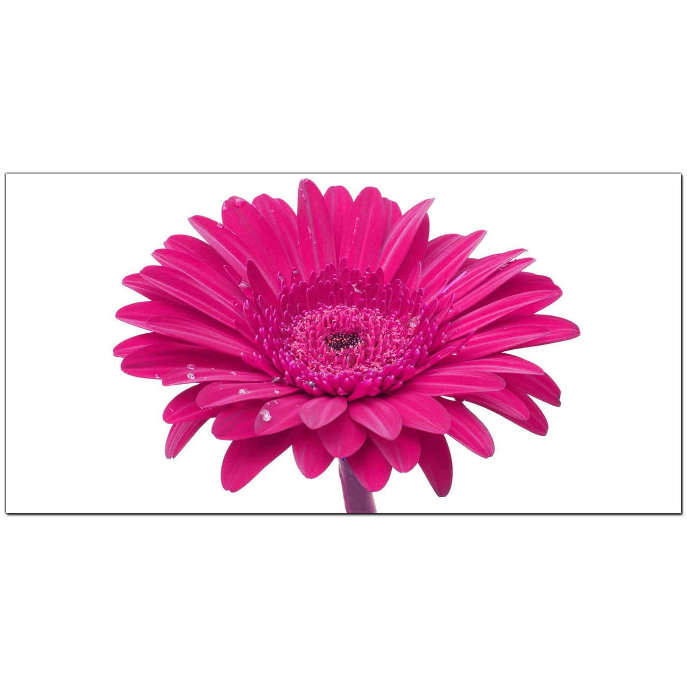 Modern pink canvas wall art of a daisy flower display gallery item 2 pink bedroom panoramic canvas of flowers display gallery item 3 bedroom pink panoramic canvas of flowers dhlflorist Image collections