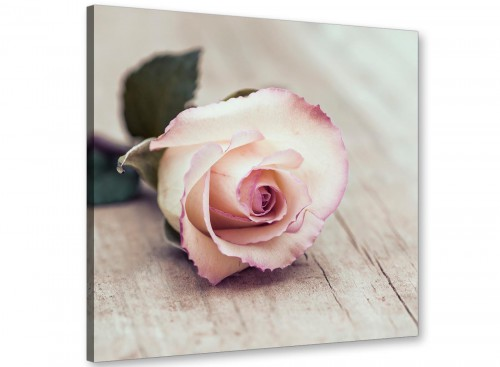 cheap vintage shabby chic french rose cream canvas modern 49cm square 1s278s for your living room