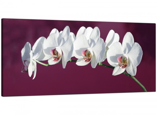 Plum Cheap Extra Large Canvas of Flowers