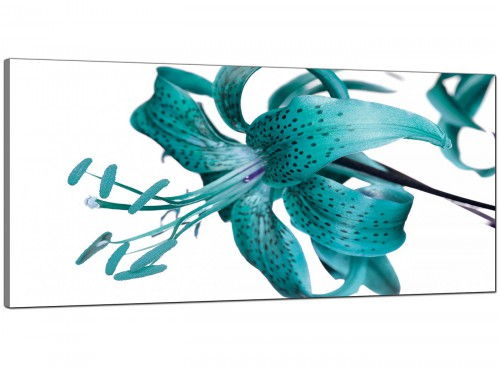 Teal Cheap Wide Canvas of Flowers