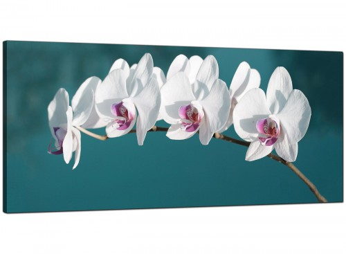 Teal Living Room Panoramic Canvas of Orchids