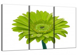 Daisy Flower Canvas Wall Art Three Part for your Living Room