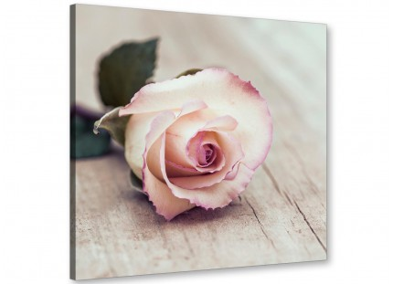Vintage Shabby Chic French Rose - Cream Floral Canvas Modern 79cm Square - 1s278l