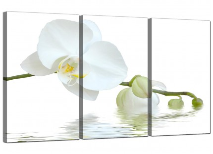Modern White Orchid Flower Fresh Floral Canvas - Set of 3 - 125cm - 3134