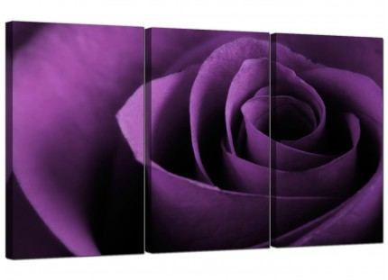 Modern Purple Rose Petal Flower Floral Canvas - Set of 3 - 125cm - 3112