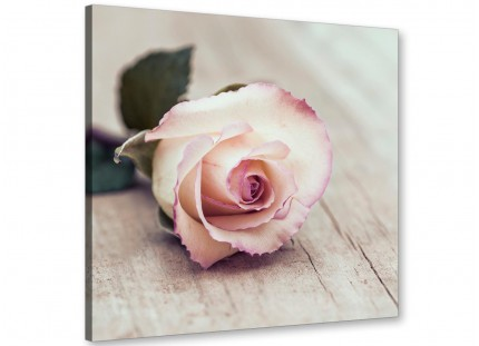 Vintage Shabby Chic French Rose - Cream Floral Canvas Modern 49cm Square - 1s278s