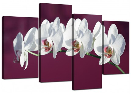 Plum White Coloured Orchid Flower Floral Canvas - Split 4 Piece - 130cm - 4116