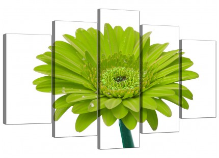 Lime Green White Gerbera Daisy Flower Floral XL Canvas - 5 Part - 160cm - 5098