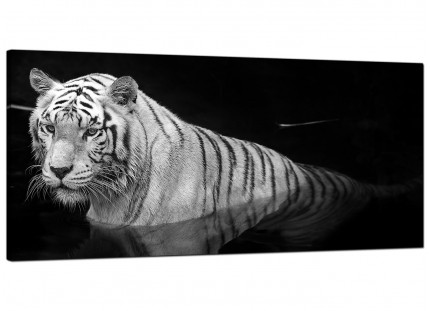 Large Black White Bengal Tiger Water Modern Canvas Art - 120cm - 1020