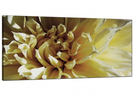Large Cream Chrysanthemum Flower Floral Modern Canvas Art - 120cm - 1104