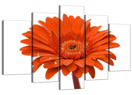 Orange White Gerbera Daisy Flower Floral XL Canvas - Set of 5 - 160cm - 5140