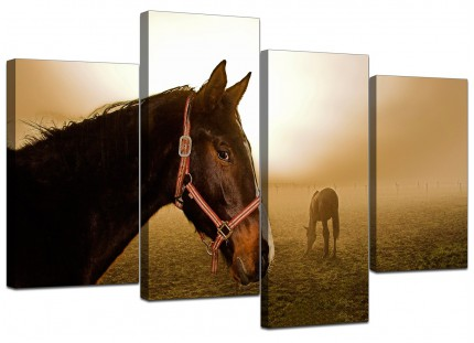 Canvas Pictures of Horses in Brown for your Teenage Girls Bedroom
