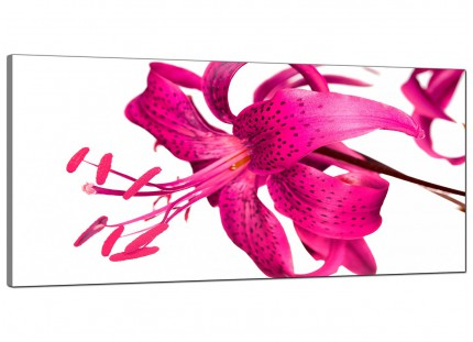 Large Pink Tiger Lily Flower on White Floral Modern Canvas Art - 120cm - 1053