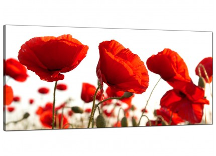 Large Red Poppy Field Poppies Flower White Floral Canvas Art - 120cm - 1056