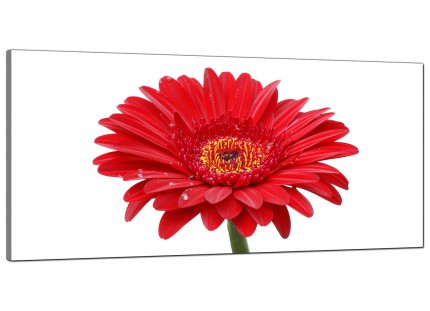 Large Red White Gerbera Daisy Flower Floral Modern Canvas Art - 120cm - 1097
