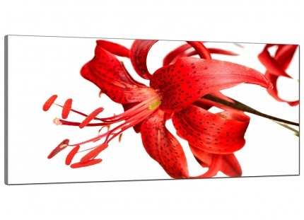Large Red Tiger Lily Flower on White Floral Modern Canvas Art - 120cm - 1052