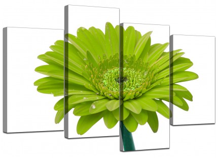 Lime Green White Gerbera Daisy Flower Floral Canvas - 4 Piece - 130cm - 4098