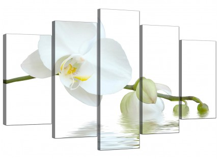 Extra Large White Orchid Flower Modern Fresh Floral Canvas - 5 Set 160cm - 5134