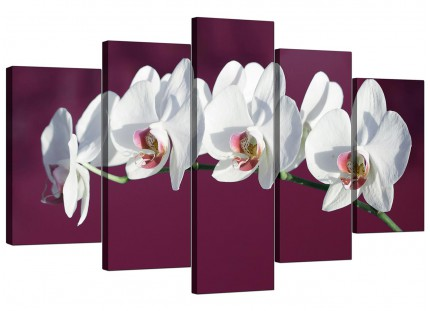 Plum White Coloured Orchid Flower Floral XL Canvas - 5 Piece - 160cm - 5116