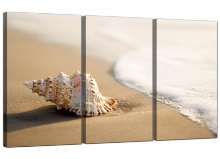 Modern Sea Shells Shore Bathroom Cream Beige Beach Canvas - 3 Set - 125cm - 3146