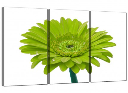 Modern Lime Green White Gerbera Daisy Flower Floral Canvas - 3 Set 125cm - 3098