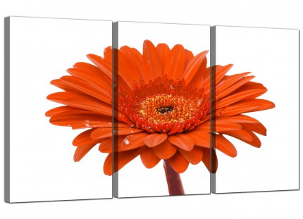 Modern Orange White Gerbera Daisy Flower Floral Canvas - Set of 3 - 125cm - 3140