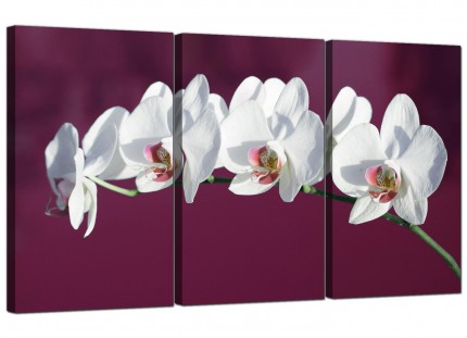 Modern Plum White Coloured Orchid Flower Floral Canvas - 3 Panel - 125cm - 3116