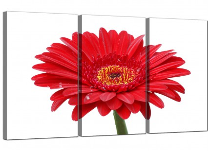 Modern Red White Gerbera Daisy Flower Floral Canvas - Set of 3 - 125cm - 3097