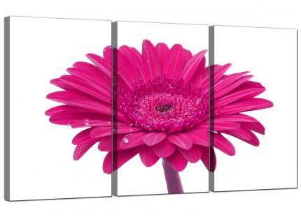 Modern Pink White Gerbera Daisy Flower Floral Canvas - 3 Piece - 125cm - 3099