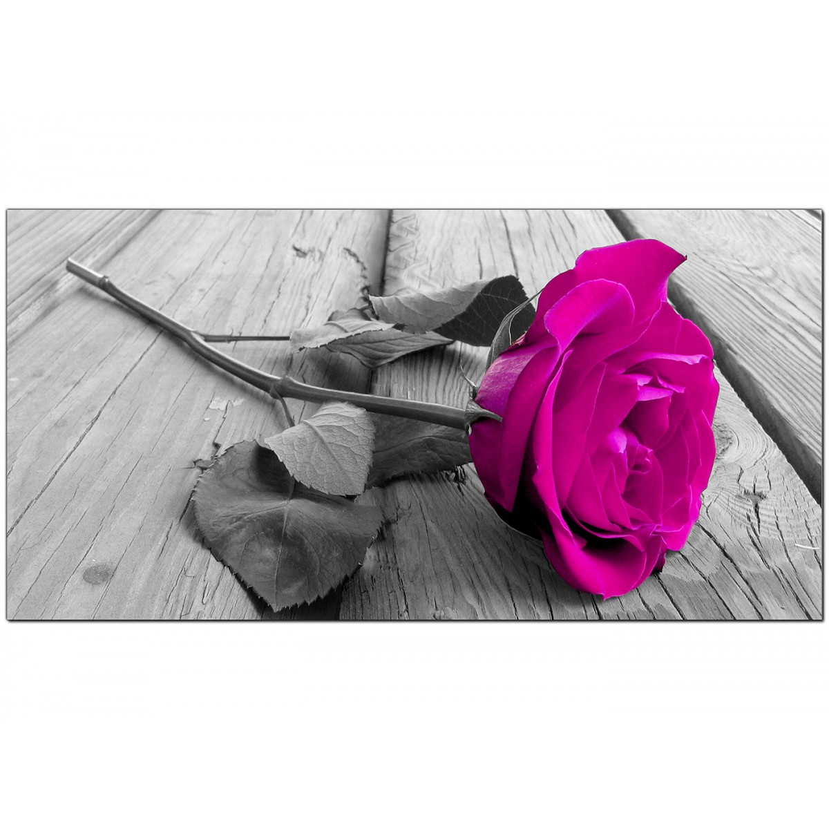Modern black and white canvas art of a pink rose flower item number 1036 mightylinksfo