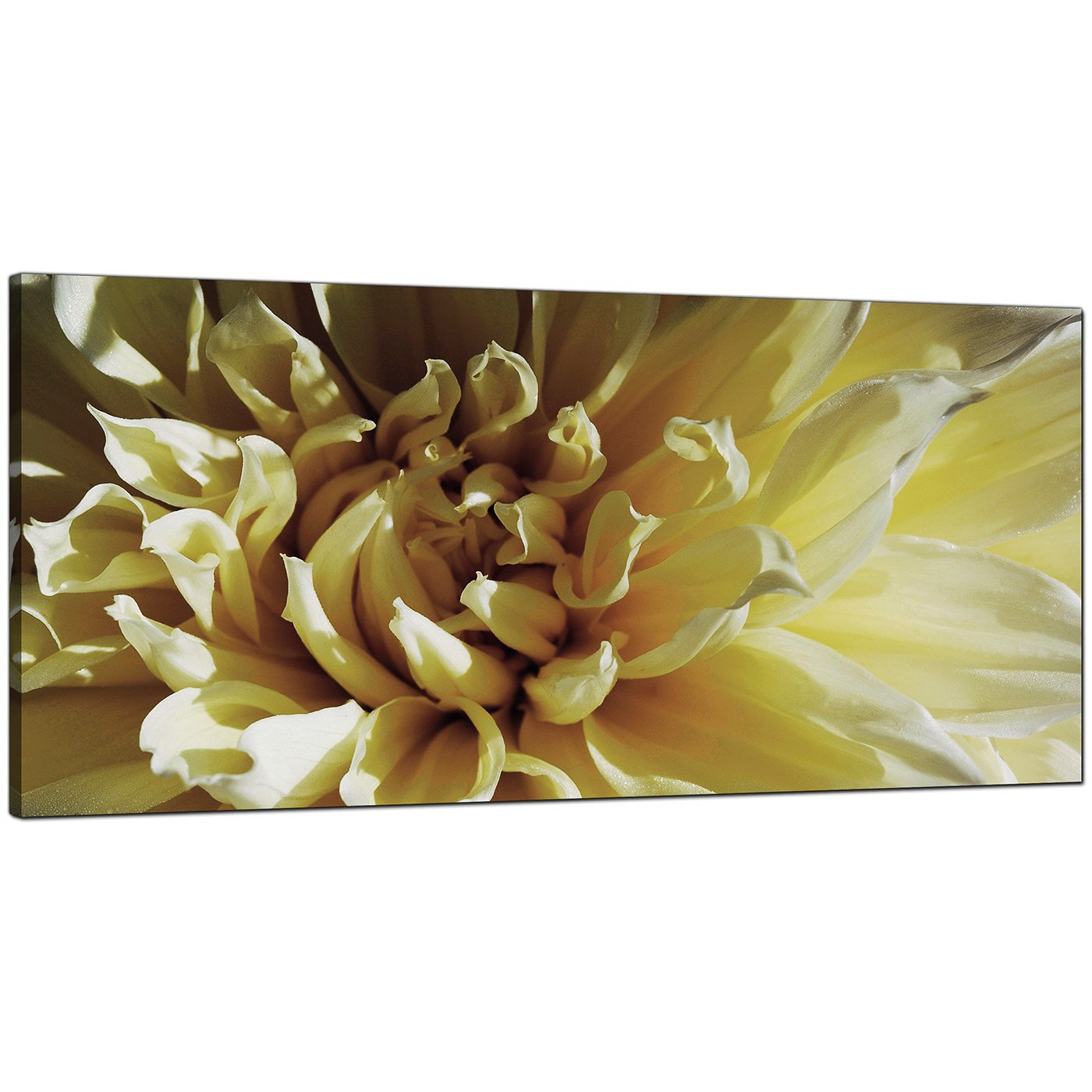 Modern Cream Canvas Prints of a Chrysanthemum Flower