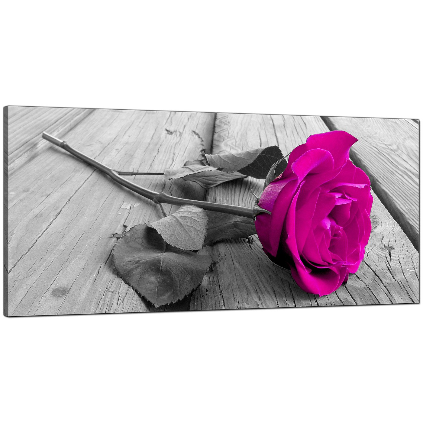 Modern Black And White Canvas Art Of A Pink Rose Flower