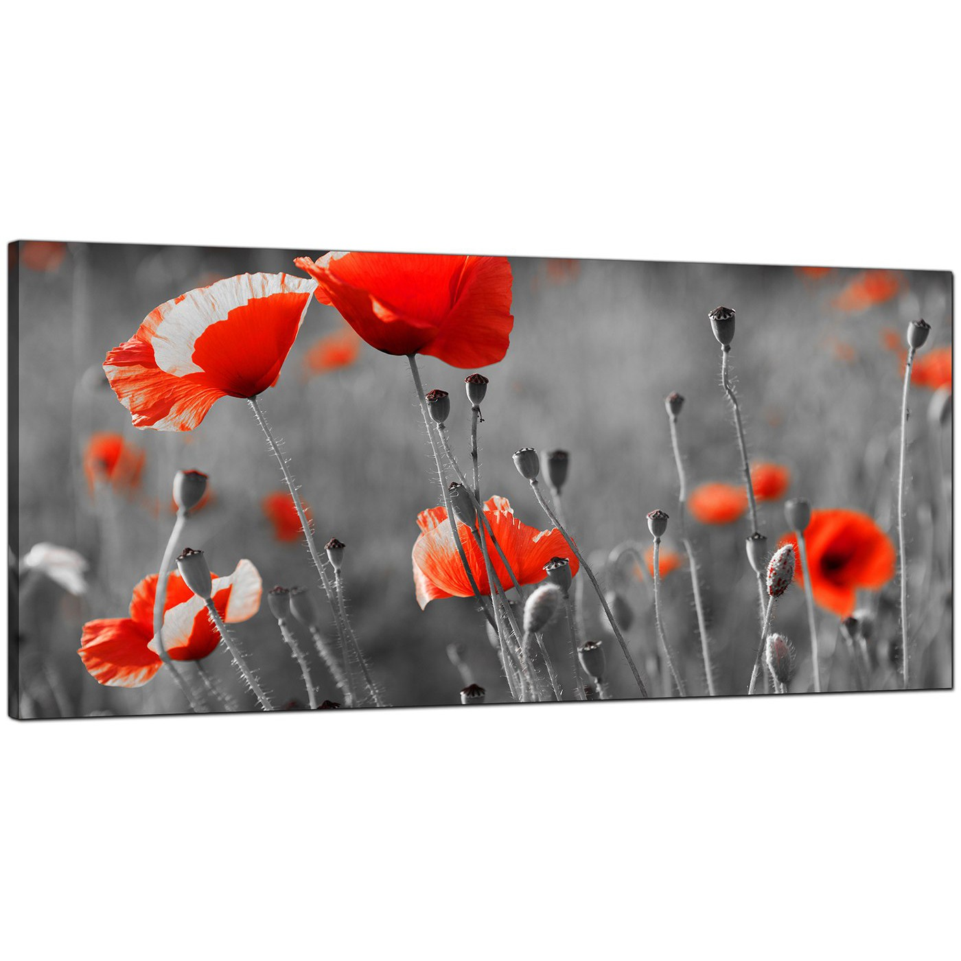 Large black and white canvas art of red poppies display gallery item 9 mightylinksfo