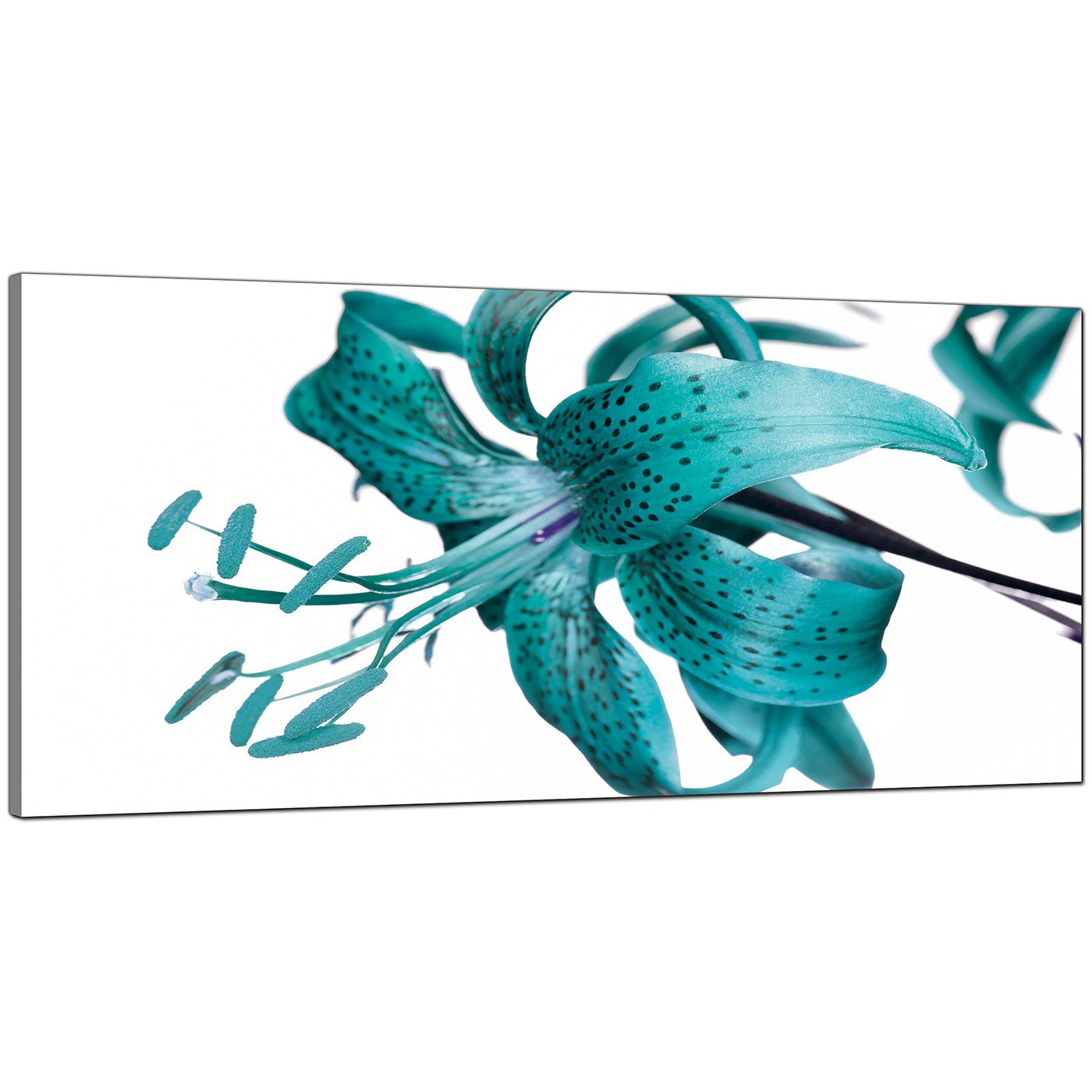 Large teal canvas prints of a tiger lily flower display gallery item 4 teal cheap wide canvas of flowers display gallery item 5 izmirmasajfo