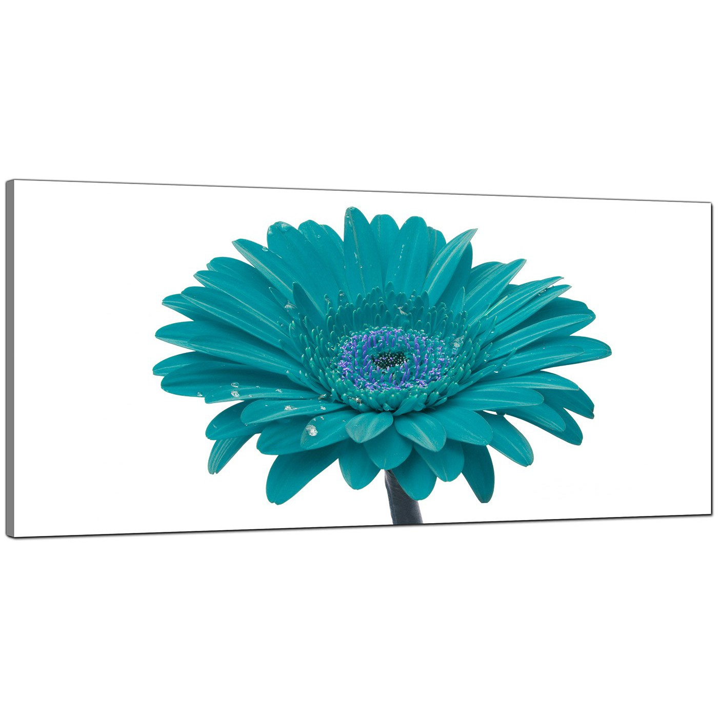 Cheap Teal Canvas Pictures Of A Daisy Flower