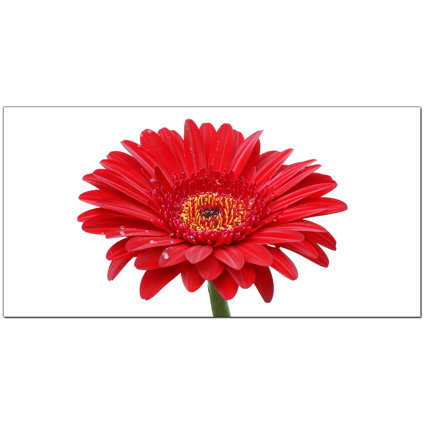 Large Red Canvas Art Of A Daisy Flower