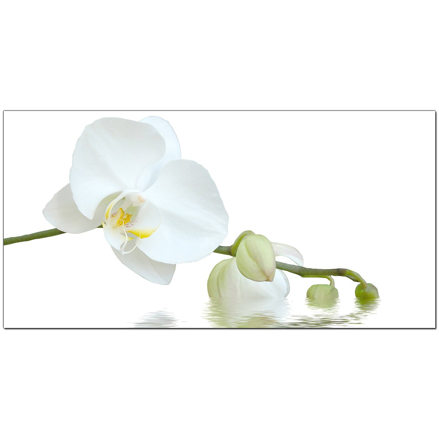 Modern Canvas Prints Of White Orchids For Your Living Room