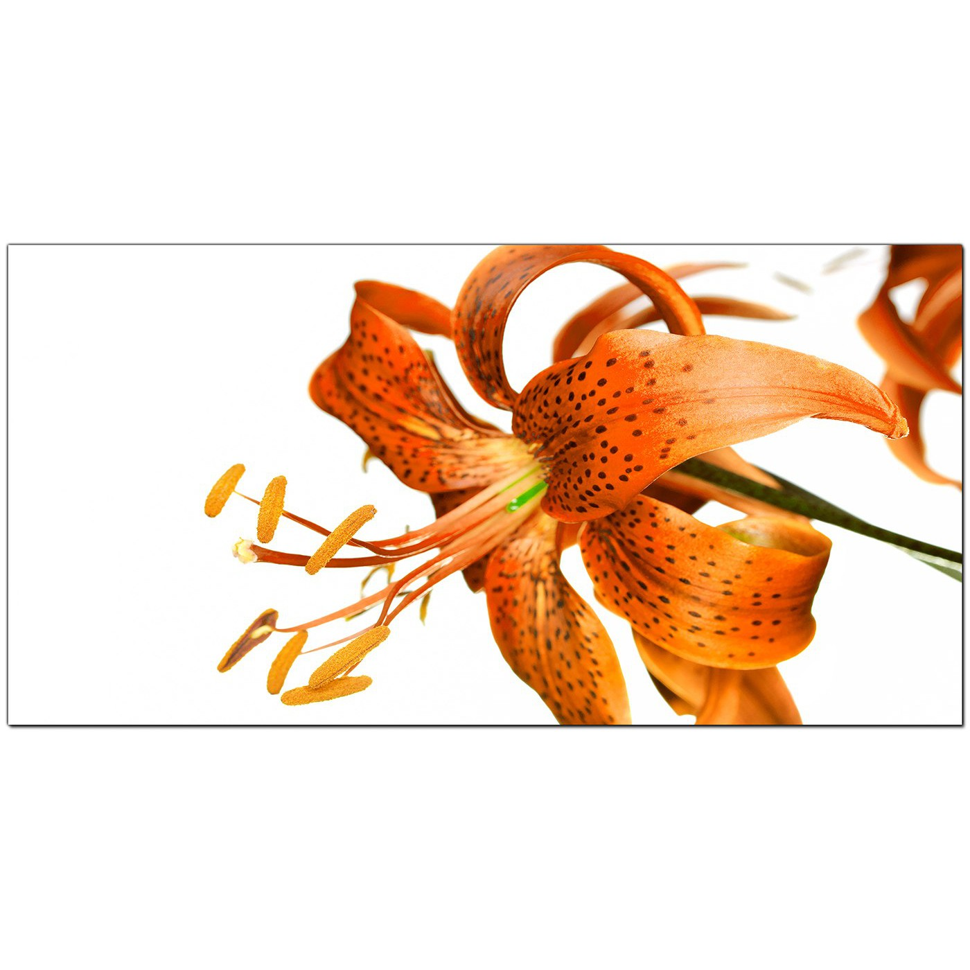 Cheap orange canvas prints of a tiger lily flower display gallery item 4 orange living room wide canvas of flowers display gallery item 5 large tiger lily izmirmasajfo