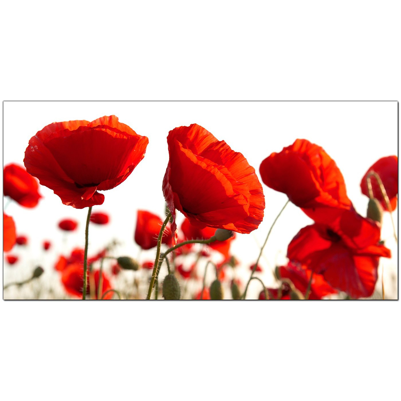 Large Red Canvas Prints Of Poppy Flowers