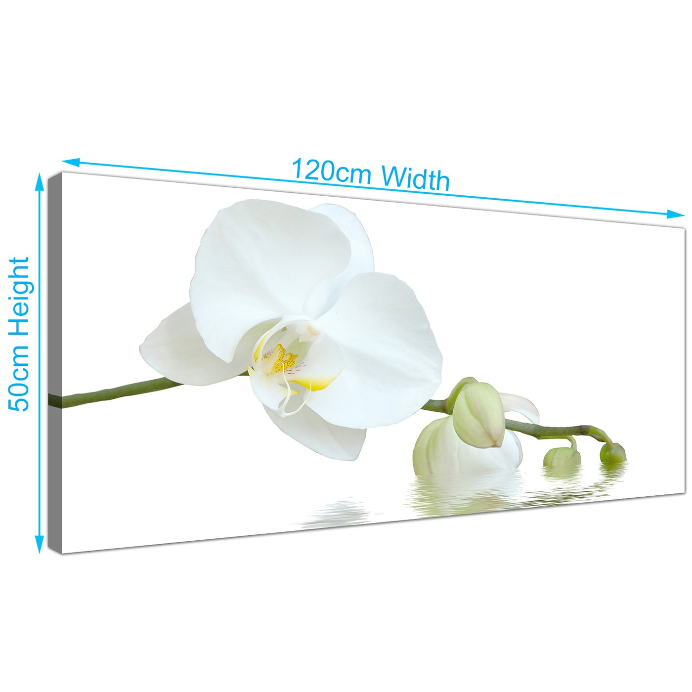Modern canvas prints of white orchids for your living room display gallery item 4 panoramic white flower canvas pictures 120cm x 50cm 1134 display gallery item 5 mightylinksfo