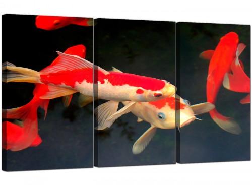 Three Part Fish Canvas Art Koi Carp 3094