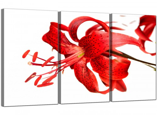 Tiger Lily Flower on White Floral Canvas