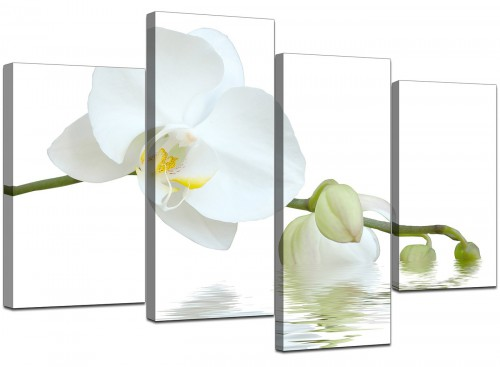 Modern White Orchid Flower Fresh Floral Canvas