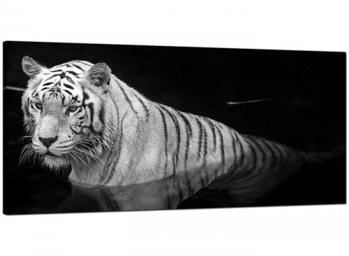 Modern Black White Bengal Tiger Water Canvas