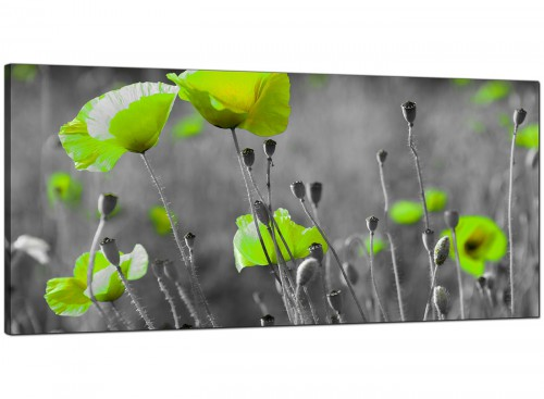 Lime Green Poppy Flowers Kitchen Canvas Wall Art Accessories - Abstract 1s138s - 49cm Square Print
