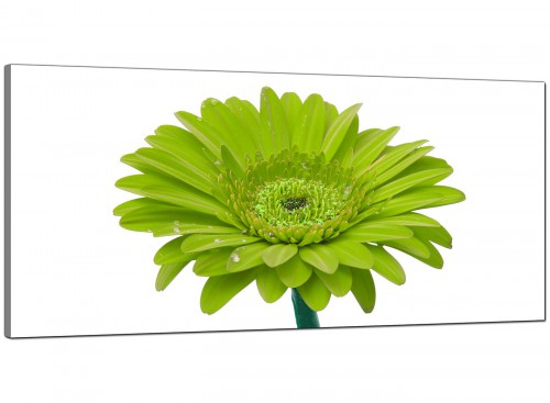 Lime-Green Bedroom Wide Canvas of Daisy